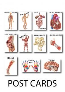 Kaart Anatomie 3-Set